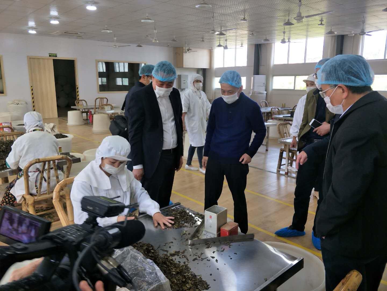 福鼎市委书记刘振辉一行到临品品香调研集约化、智能化建立
